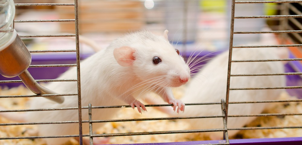 Researchers Develop New Animal Model of Multiple Myeloma