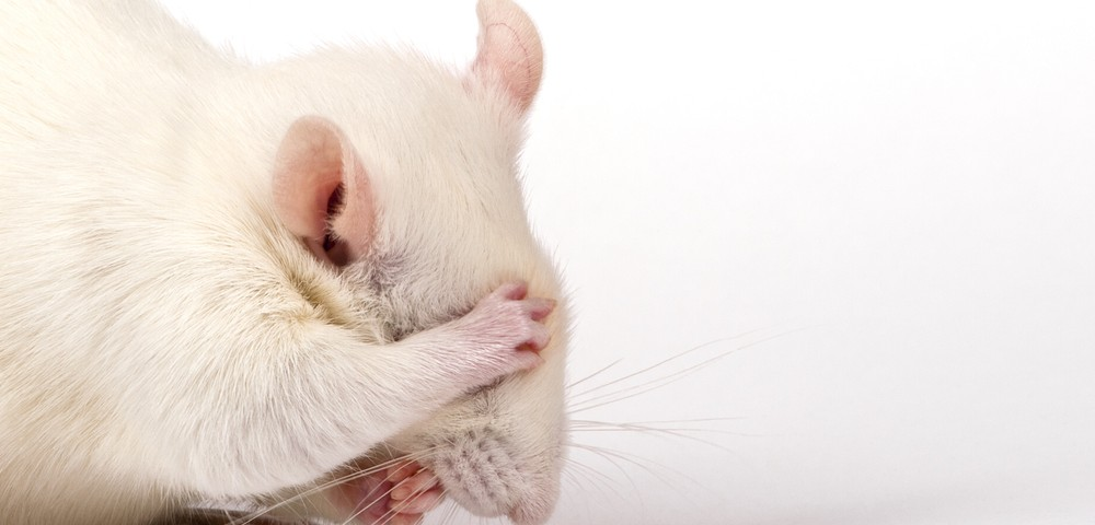 Multiple Myeloma Studied in New Mouse Model Developed at Yale
